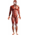 Halloween anatomische man horror bodysuit
